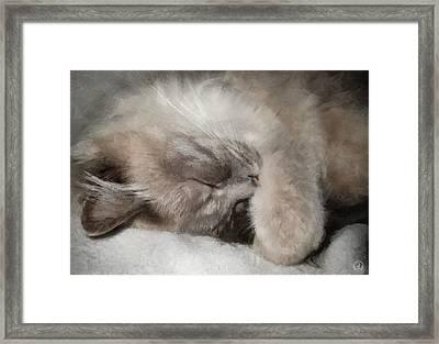 Cosy Nap Framed Print by Gun Legler