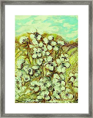 Cotton ... A Way Of Life Framed Print by Eloise Schneider