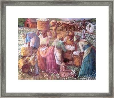 Cotton Fields Framed Print by Pamela Mccabe