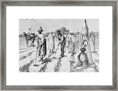 Cotton Plantation Framed Print by Edwin Austin Abbey