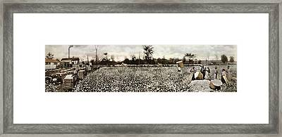 Cotton Plantation Framed Print by Library Of Congress