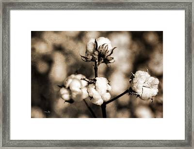 Cotton Framed Print by Scott Pellegrin