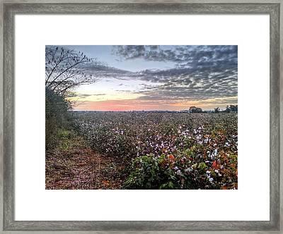 Cotton Sunrise  Framed Print by JC Findley