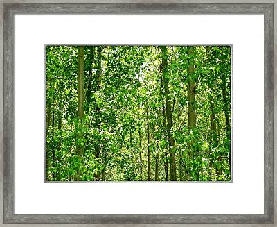 Cottonwood Forest Framed Print by Will Borden