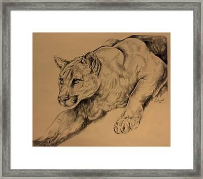 Cougar Framed Print by Derrick Higgins