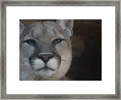 Cougar Digitally Enhanced Framed Print by Ernie Echols