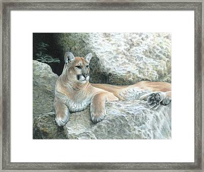 Cougar Haven Framed Print by Carla Kurt