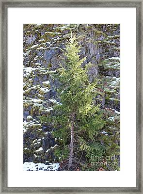 Count On Me Framed Print by Tim Rice