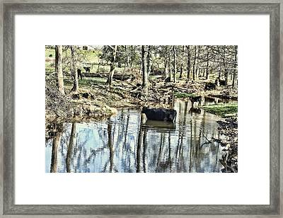 Countryside Cow - Curly Framed Print by Lesa Fine