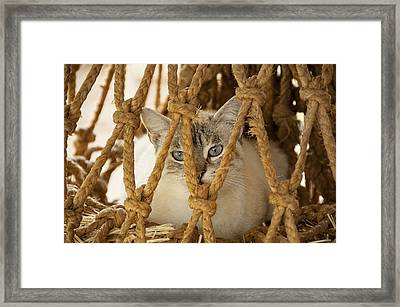 Countryside Kitty  Framed Print by Alicia Morales