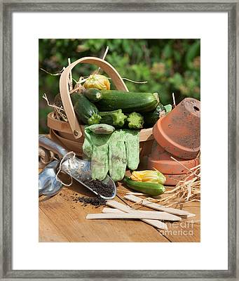 Courgette Basket With Garden Tools Framed Print by Amanda Elwell