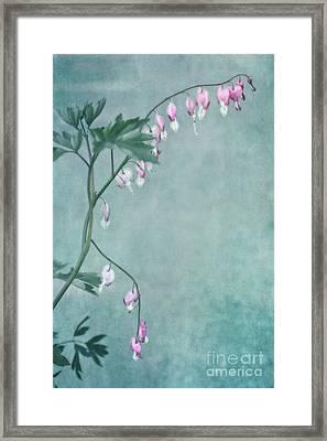 Couricino Framed Print by Priska Wettstein