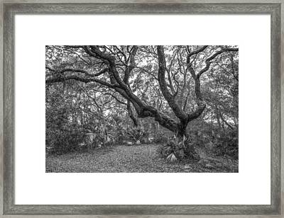 Cover Me Framed Print by Jon Glaser
