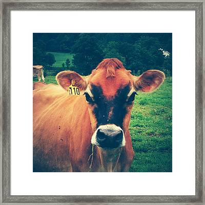 Cow 110 Framed Print by Joy StClaire
