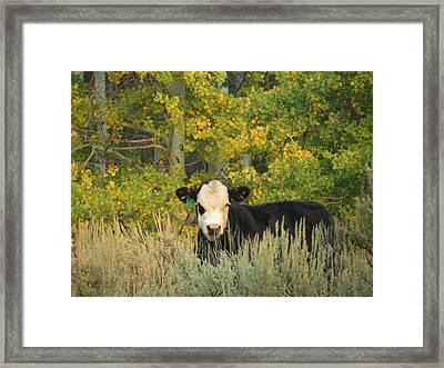 Cow #904 In Aspen Grove Framed Print by Feva  Fotos