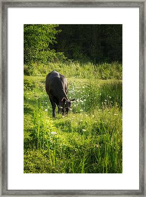 Cow Framed Print by Bill Wakeley