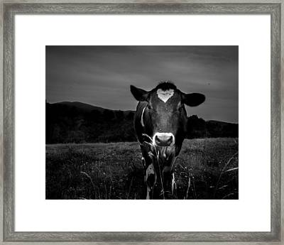 Cow Framed Print by Bob Orsillo