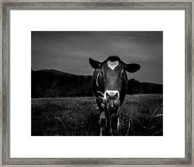 Cow Framed Print by Bob Orsillo