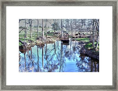 Cow Dipping Framed Print by Lesa Fine