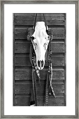 Cow Elk Skull And Feathers Framed Print by Karon Melillo DeVega