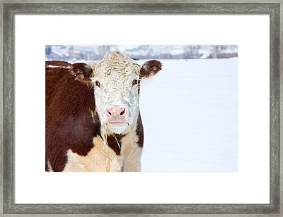 Cow - Fine Art Photography Print Framed Print by James BO  Insogna
