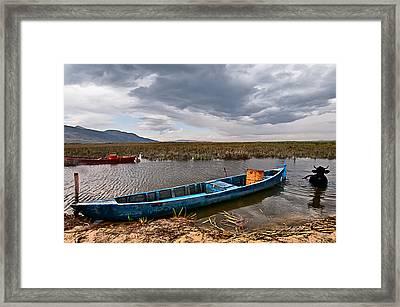 Cow In The River Framed Print by Okan YILMAZ