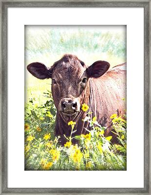 Cow In Wildflowers Framed Print by Ella Kaye Dickey