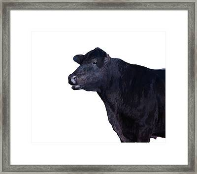 Cow On White Framed Print by Ann Powell