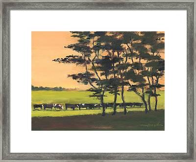 Cows 6 Framed Print by J Reifsnyder