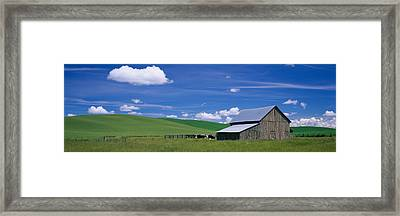 Cows And A Barn In A Wheat Field Framed Print by Panoramic Images