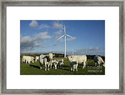 Cows And Windturbines Framed Print by Bernard Jaubert