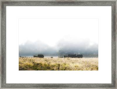 Cows In A Foggy Field Framed Print by Bill Cannon