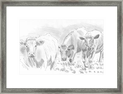 Cows Pencil Drawing Framed Print by Mike Jory
