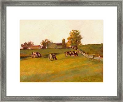 Cows2 Framed Print by J Reifsnyder