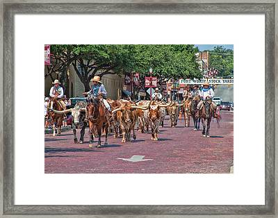 Cowtown Cattle Drive Framed Print by David and Carol Kelly