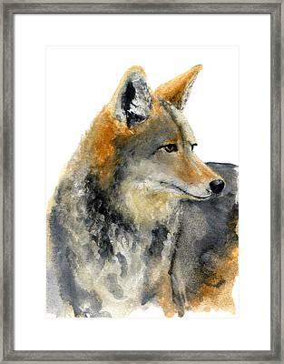 Coyote Framed Print by Carlo Ghirardelli