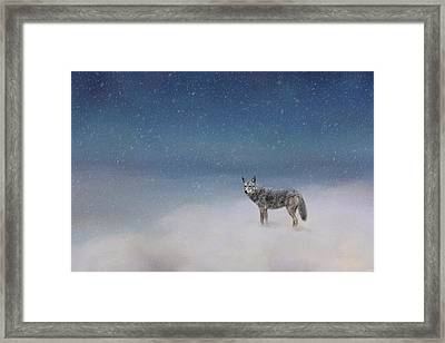 Coyote In Winter Framed Print by Jai Johnson
