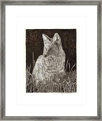 Coyote Night Hunting Framed Print by Jack Pumphrey