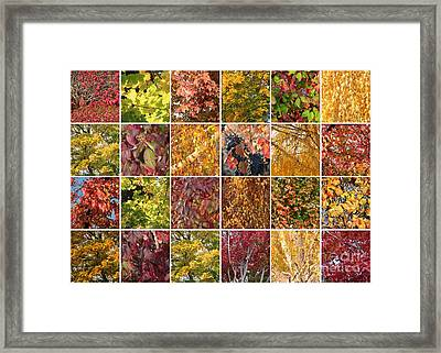 Cozy Autumn Leaves Collage Framed Print by Carol Groenen