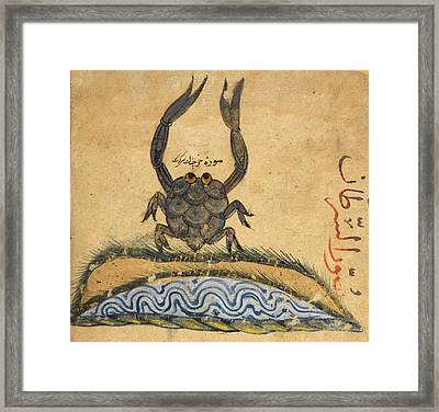 Crab Framed Print by British Library