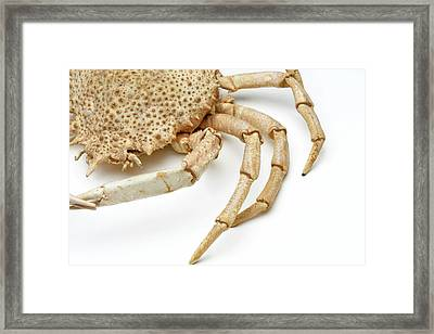 Crab Exoskeleton Specimen Framed Print by Ucl, Grant Museum Of Zoology
