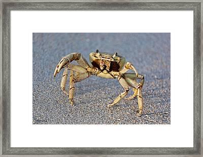 Crabby Framed Print by Michelle Wiarda