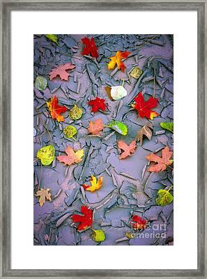 Cracked Mud And Leaves Framed Print by Inge Johnsson
