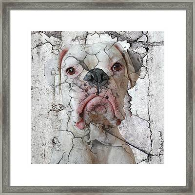 Cracking Up Framed Print by Judy Wood