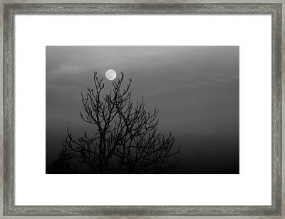 Cradled Moon Framed Print by Nathaniel Kidd