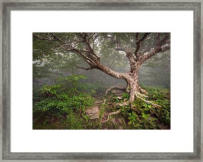 Craggy Gardens Blue Ridge Parkway Asheville Nc - Enduring Craggy Framed Print by Dave Allen