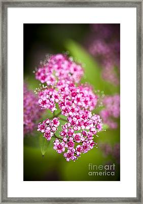 Cranberry Cotoneaster Framed Print by Kamil Swiatek