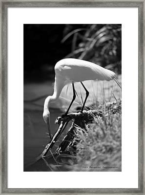 Crane Framed Print by Joey  Maganini