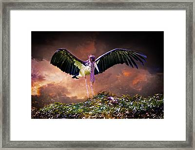 Crane The Lawyer Framed Print by Chris Lord