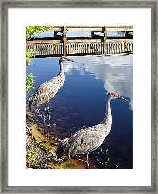Cranes At The Lake Framed Print by Zina Stromberg